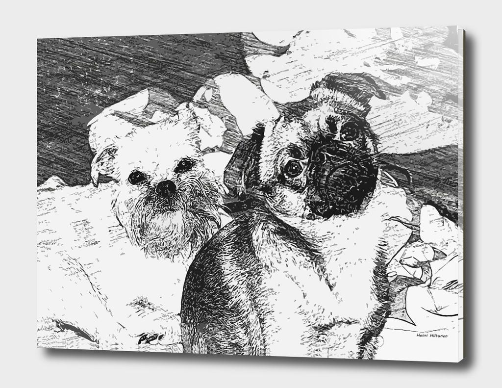 Griffon Bruxellois & Griffon petit brabancon 1