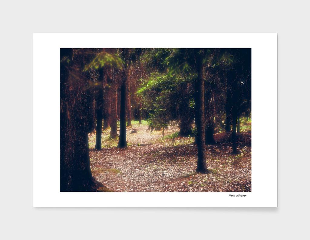 Forrest 3