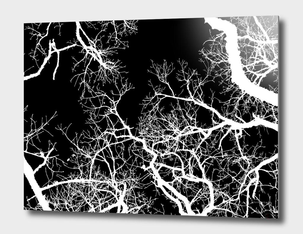 Trees 7