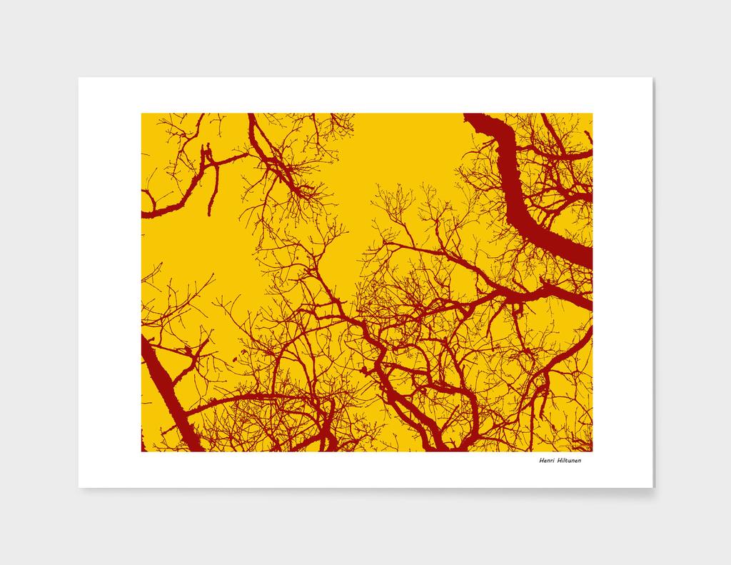 Trees 19
