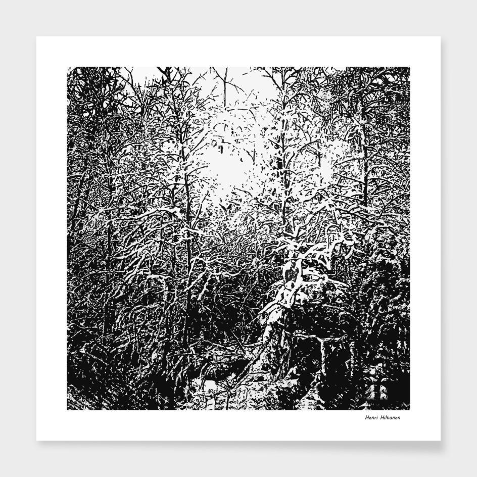 Winter forrest 2