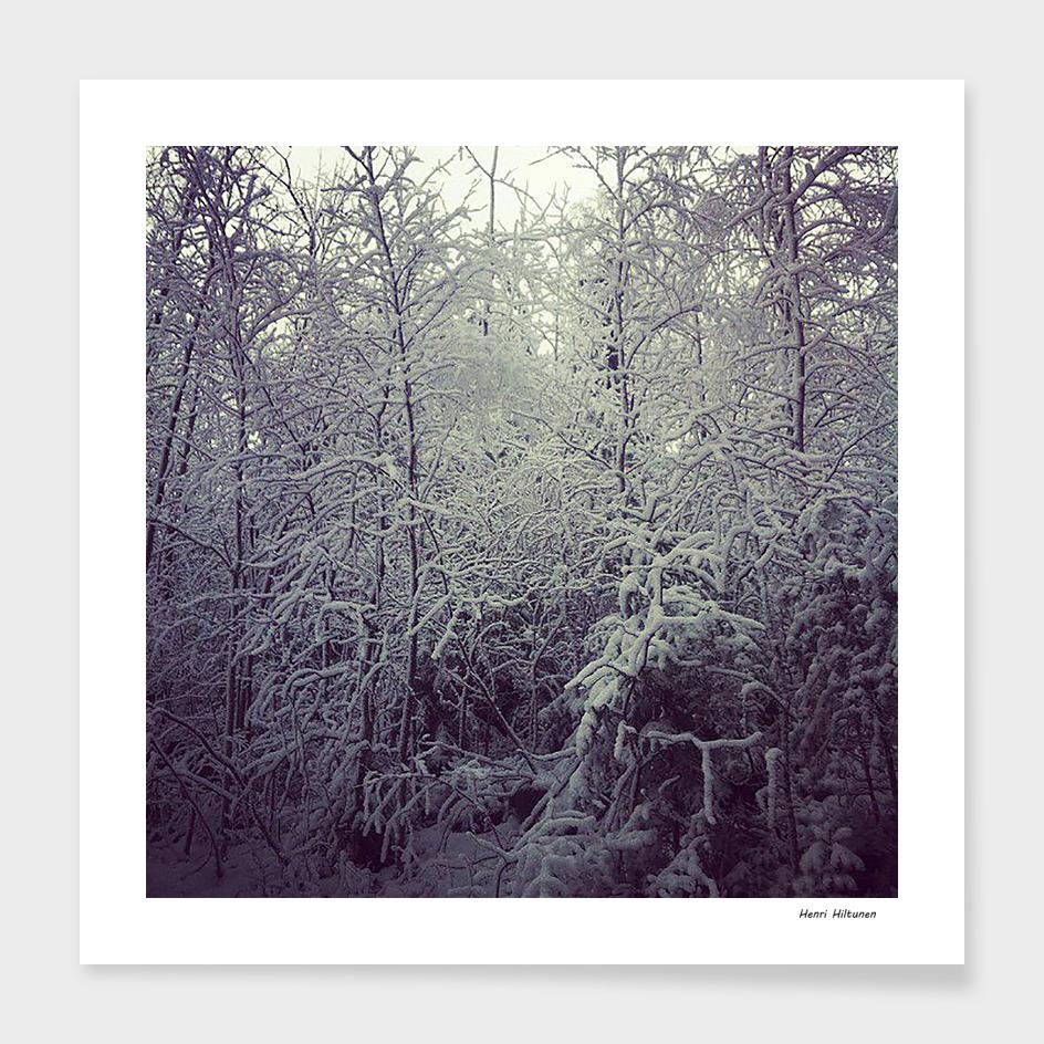 Winter forrest 3