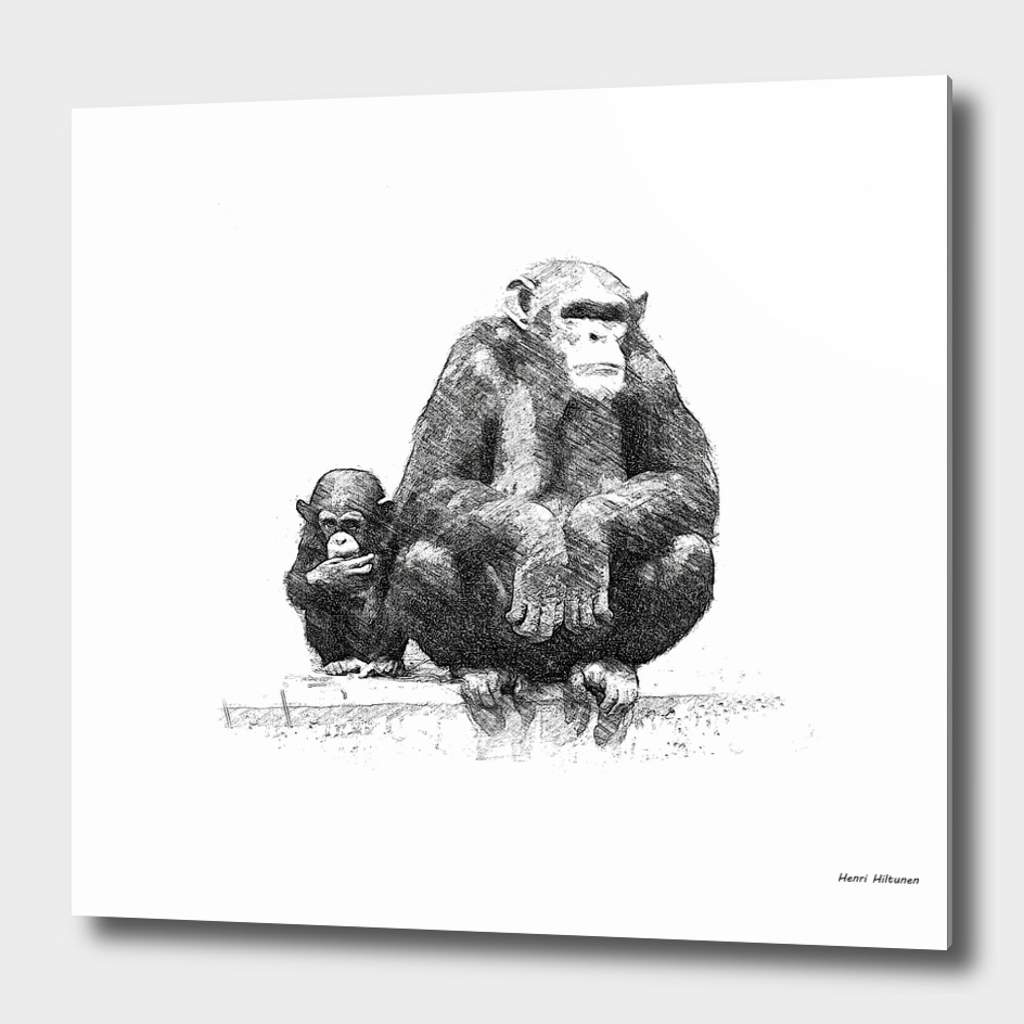 Chimpanzee 24