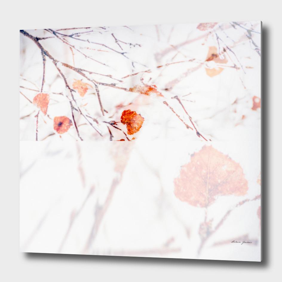 Orange Foliage