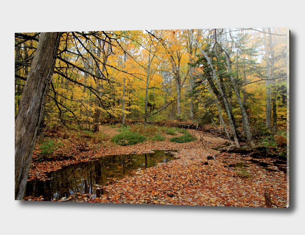Autumn Leaf Blanket