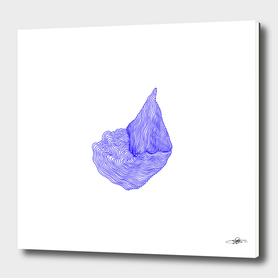 Ultramarine Shell