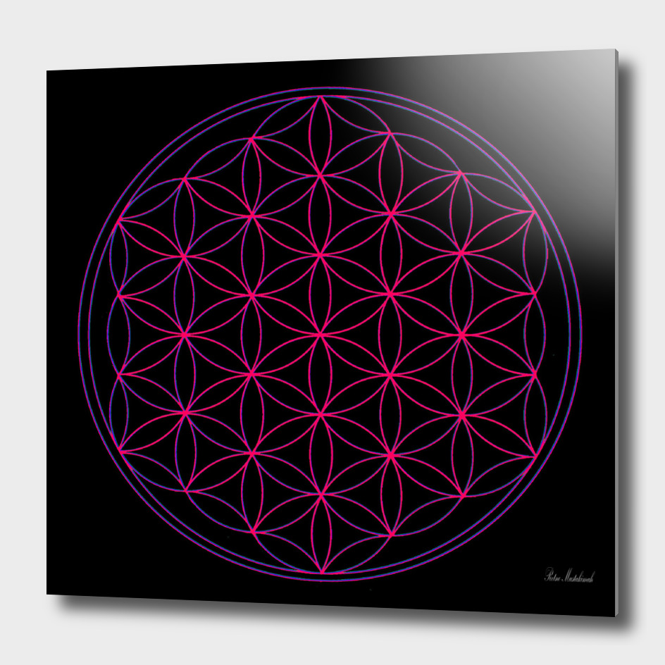Illustration Flower Of Life