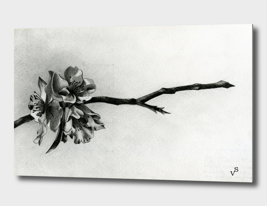Almond Flower