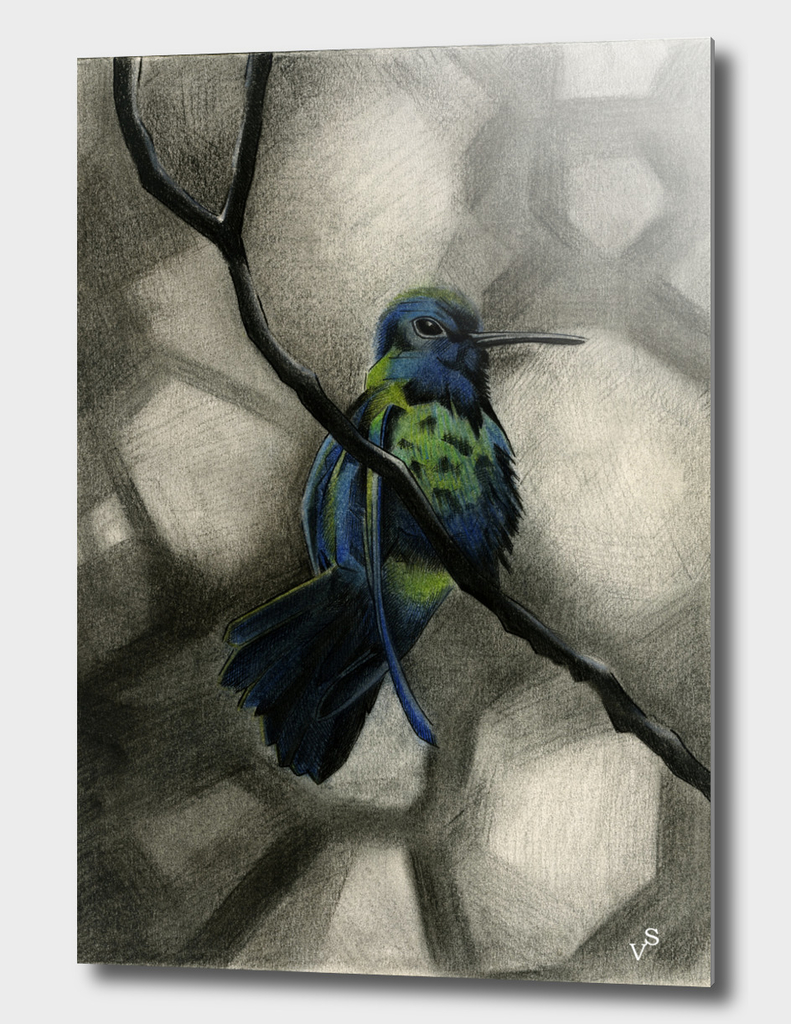 Blue Hummingbird