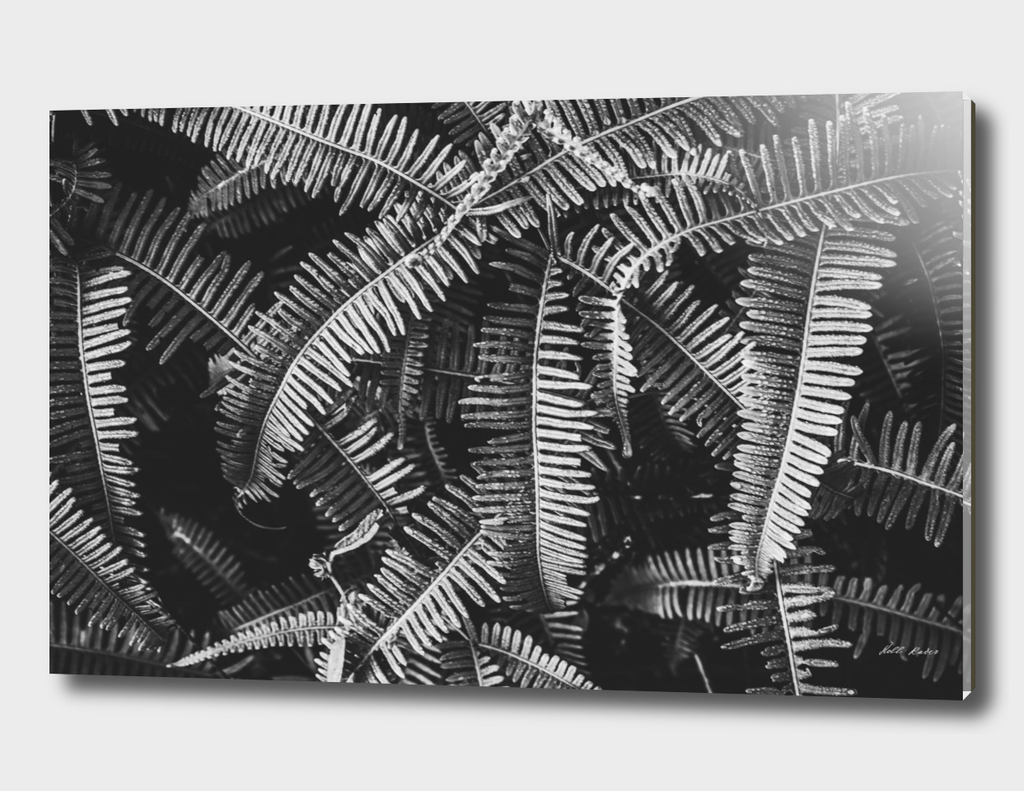 tropic strike black&white