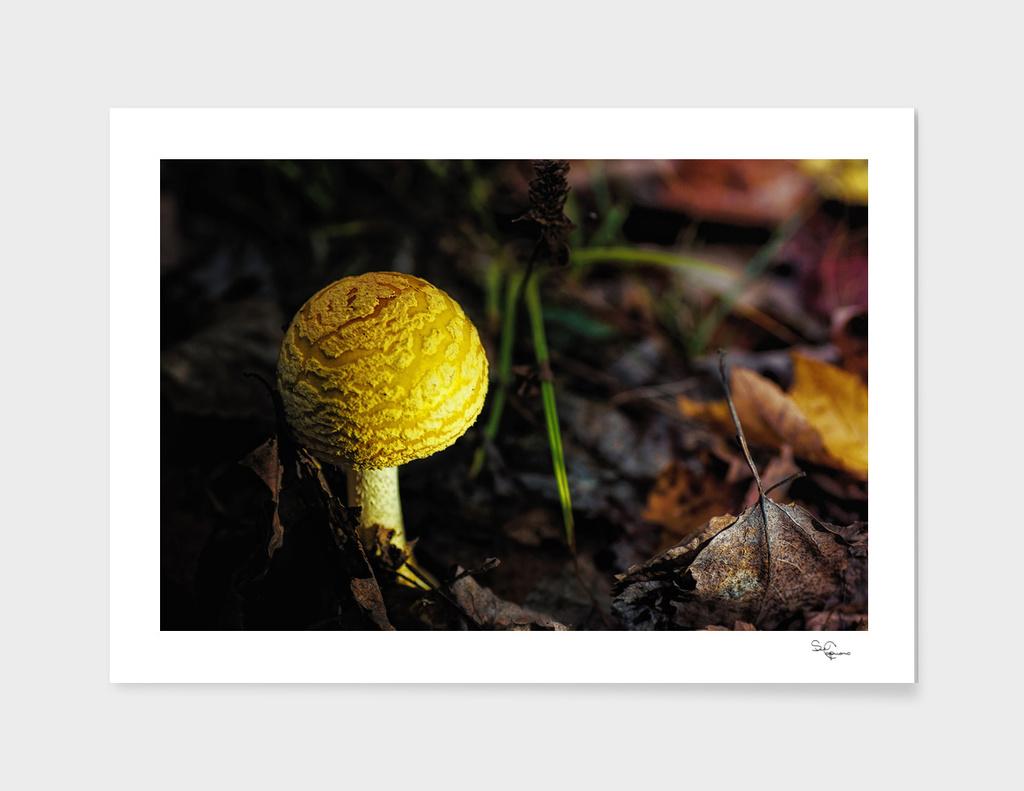 Mushroom Magic 2