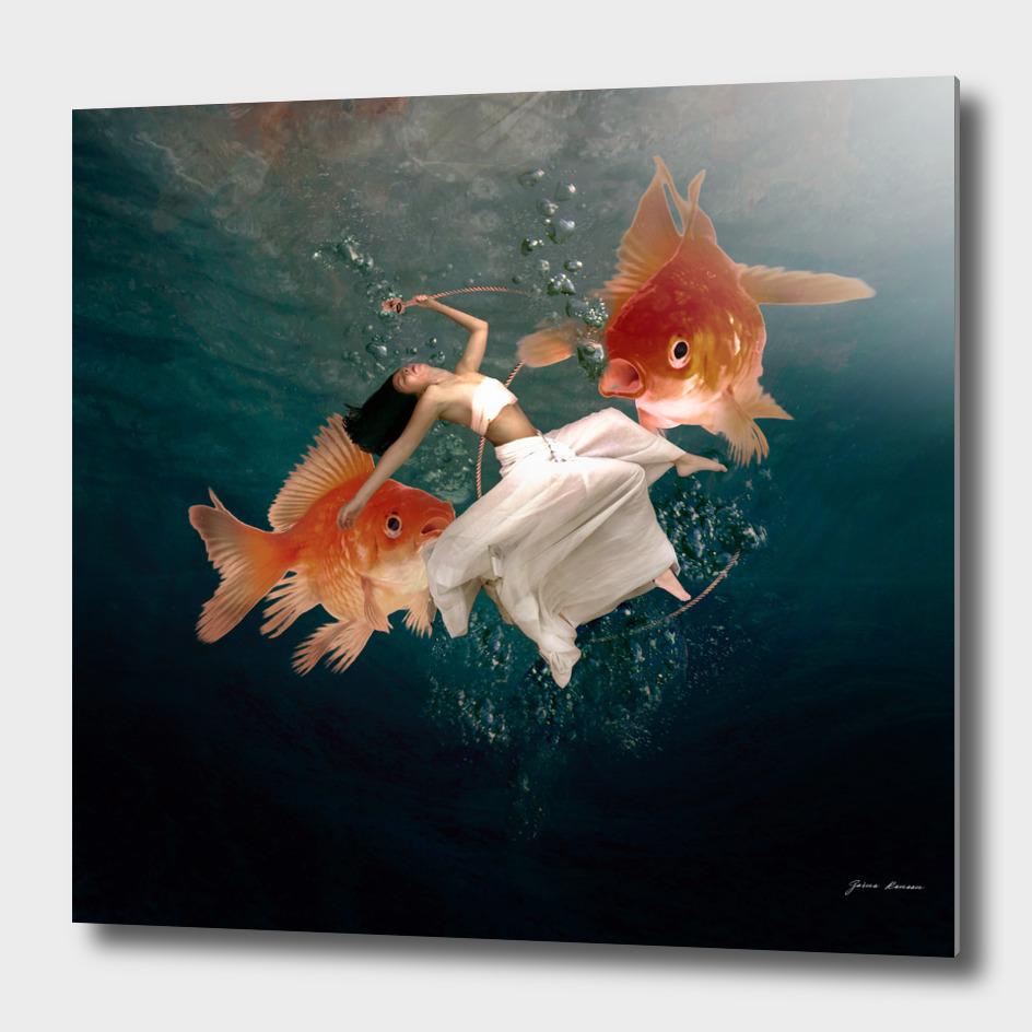 GoldFish Dame