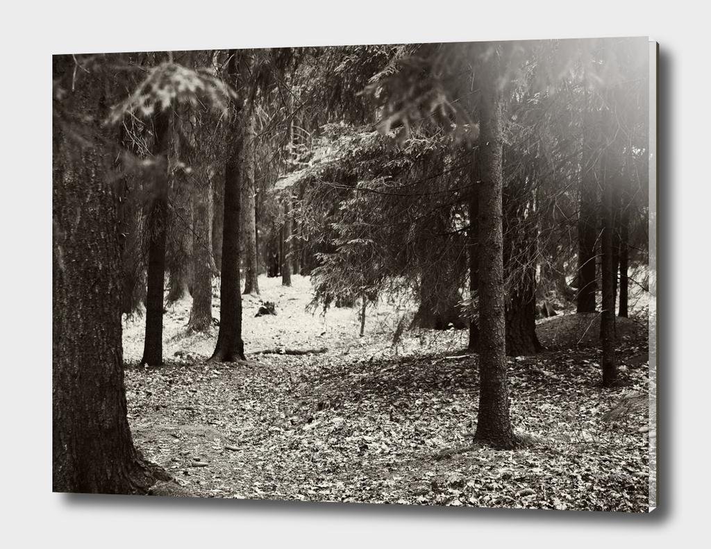 Forrest 4
