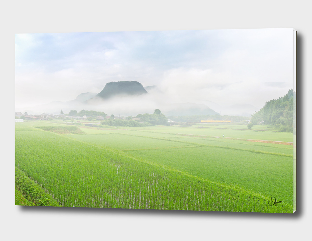 Morning fog and rural areas