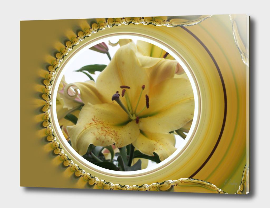 Lily Window