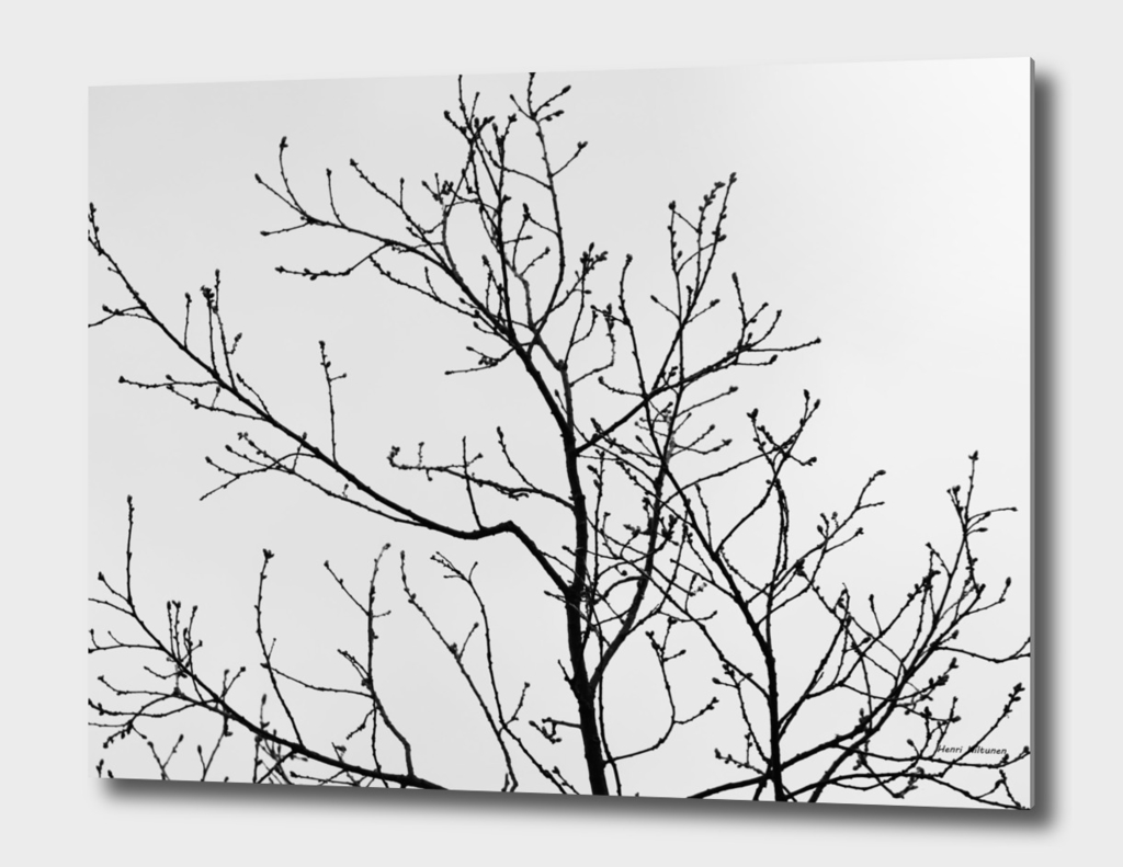 Branches  Black & White