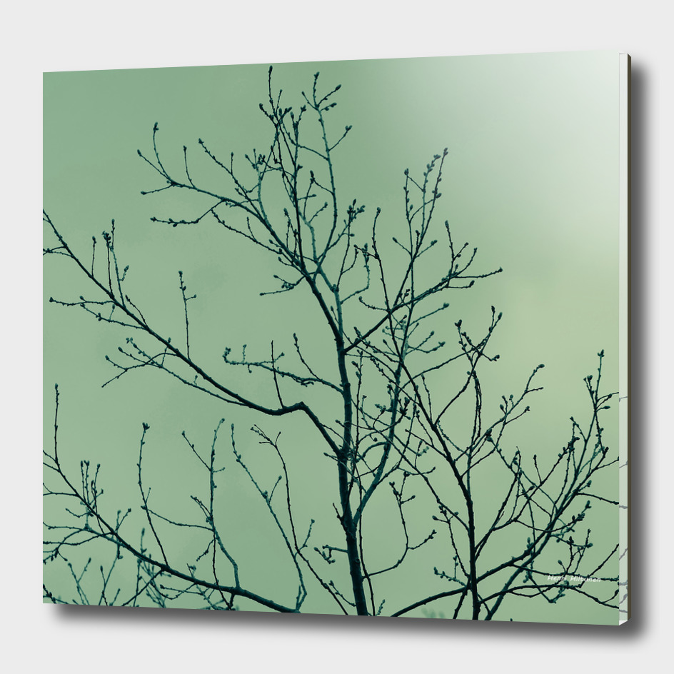 Branches green