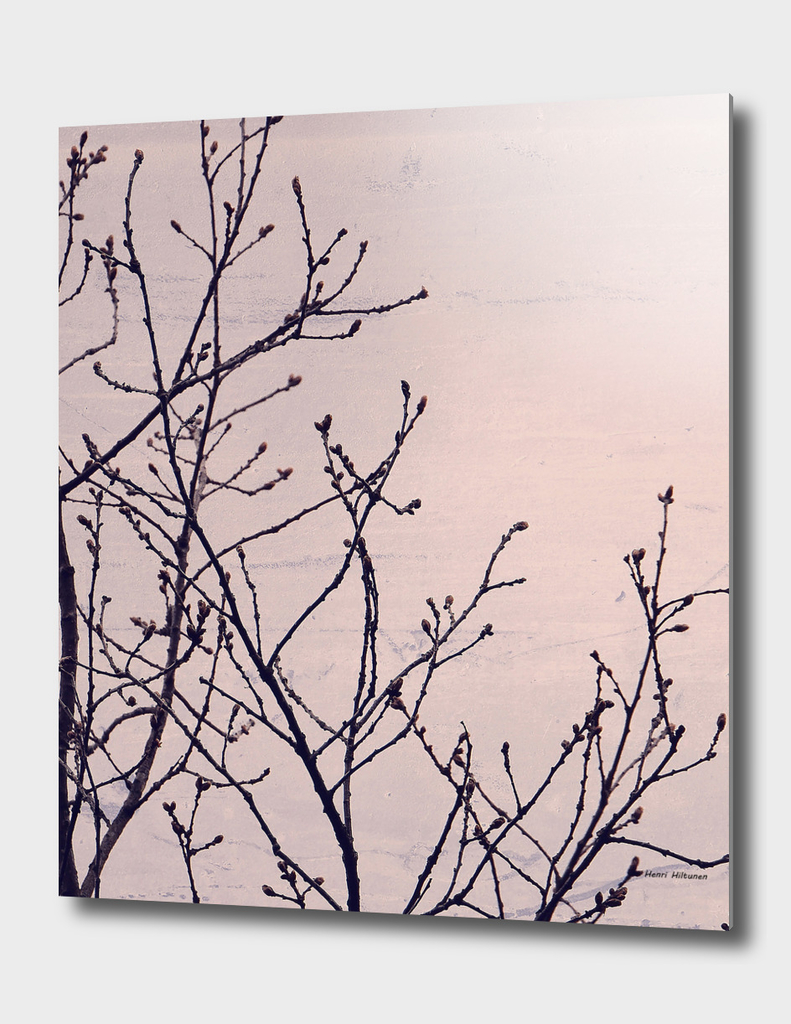 Branches pink