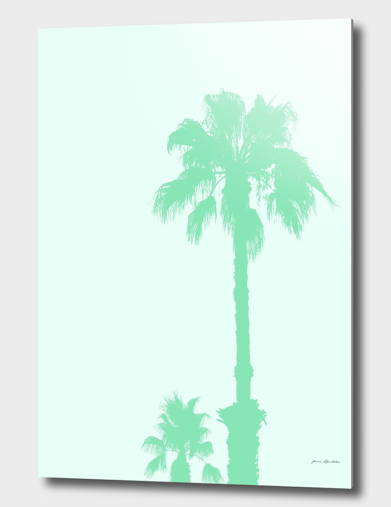 Mint Palm Trees