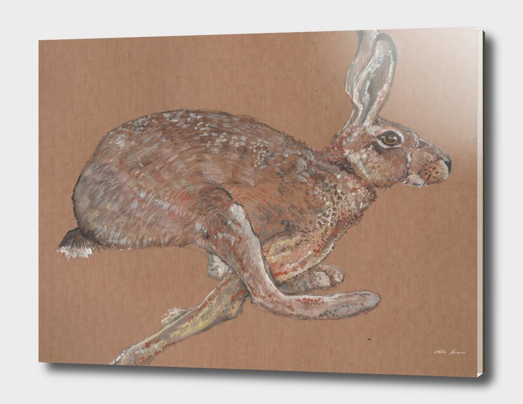 Racing Hare
