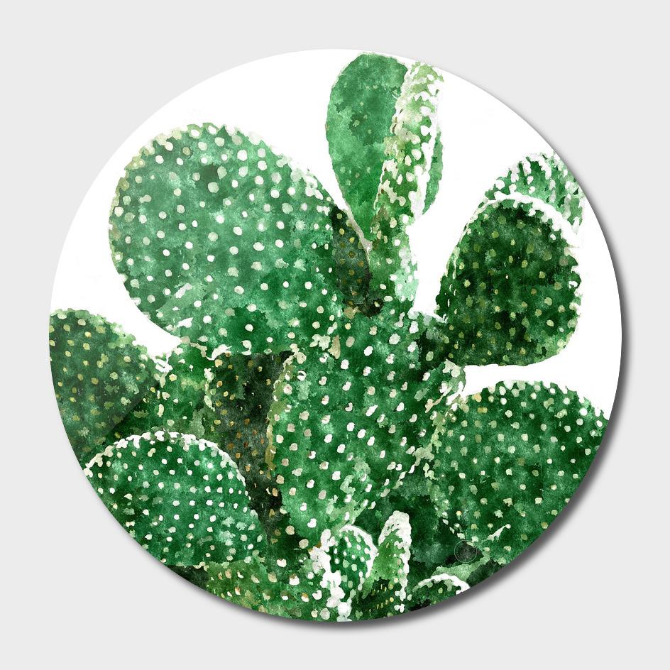 Velvet Cactus