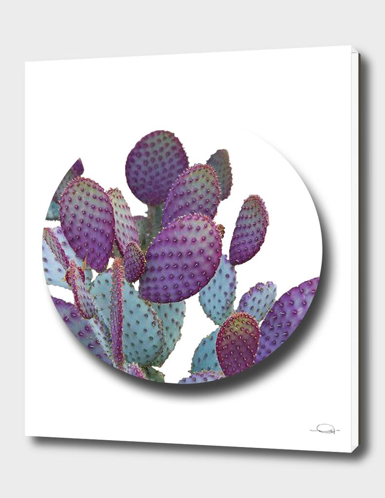Cactus Circle