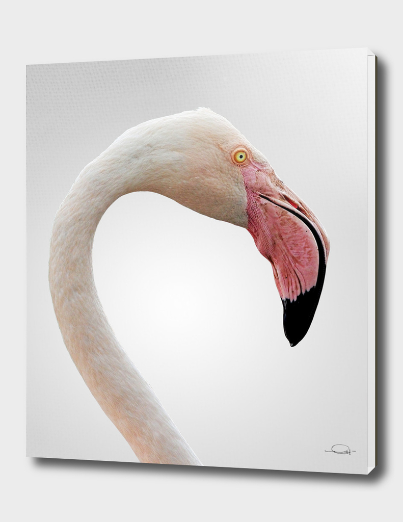 Flamingo Neck