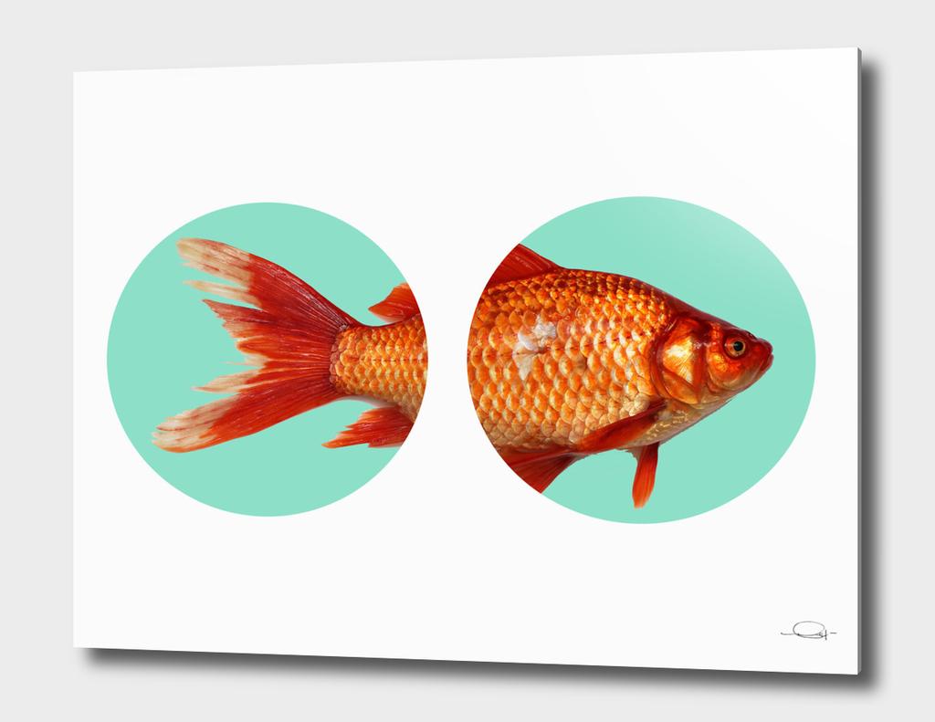 Circled Goldfish
