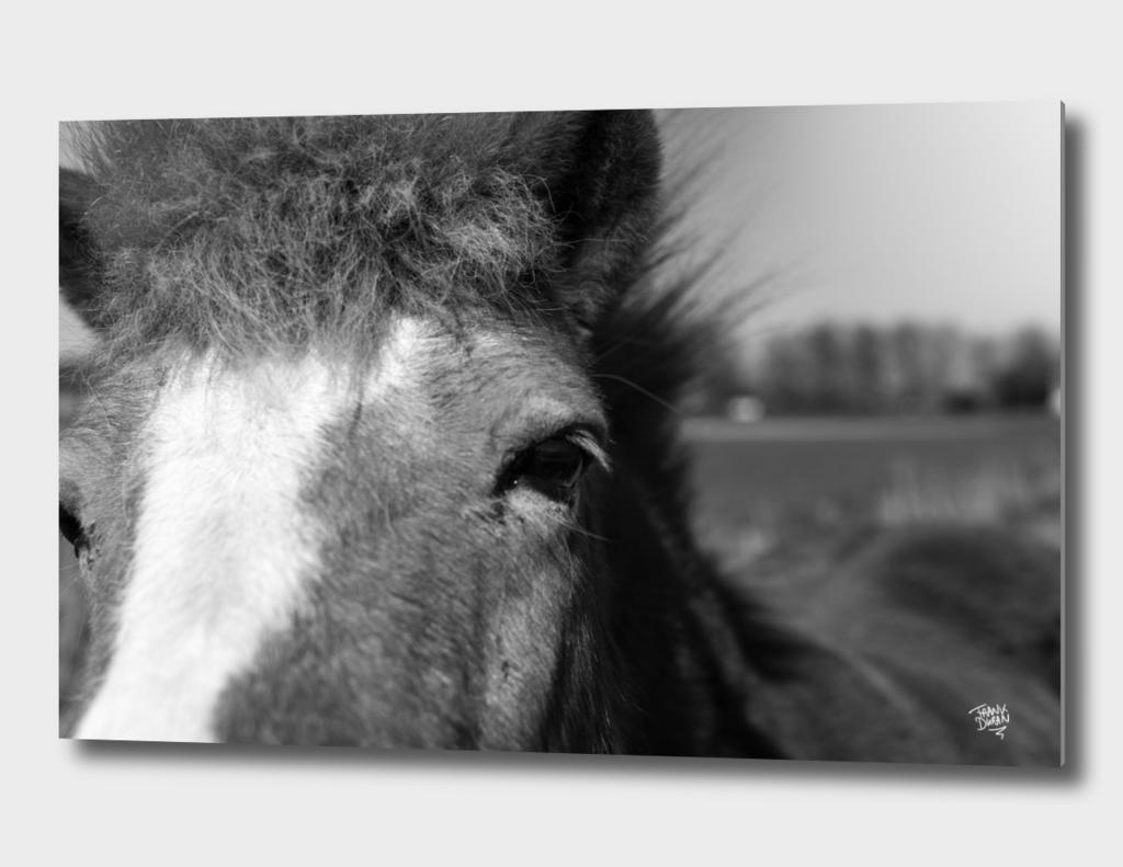 Someone's little pony