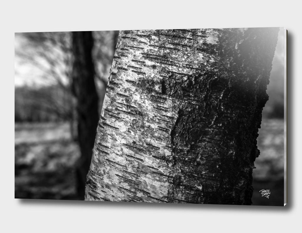 Treebark detail
