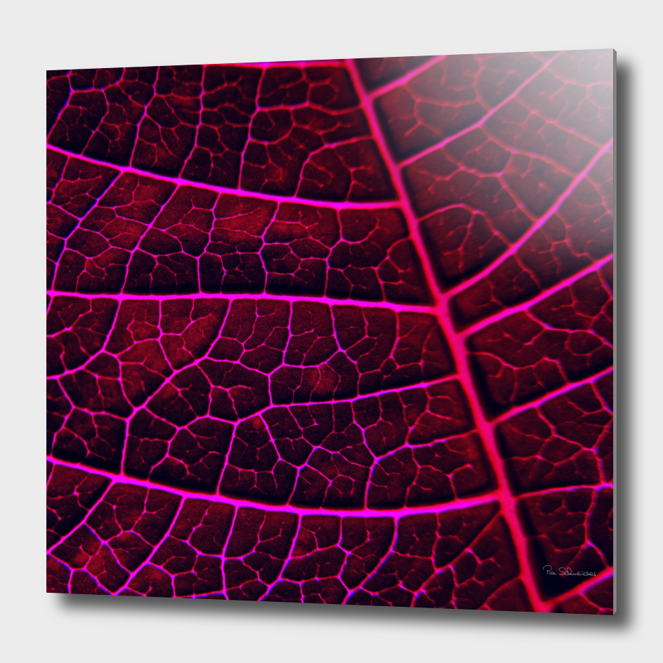 LEAF STRUCTURE RED VIOLET no3
