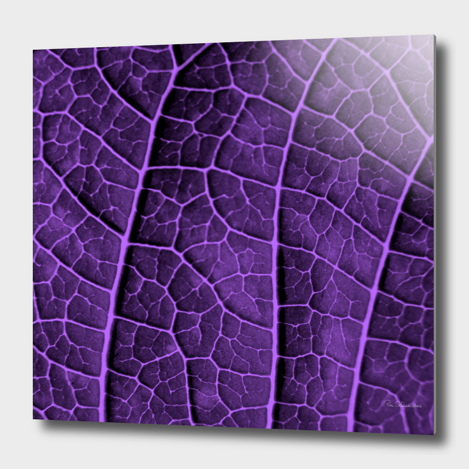 LEAF STRUCTURE ULTRAVIOLET no2