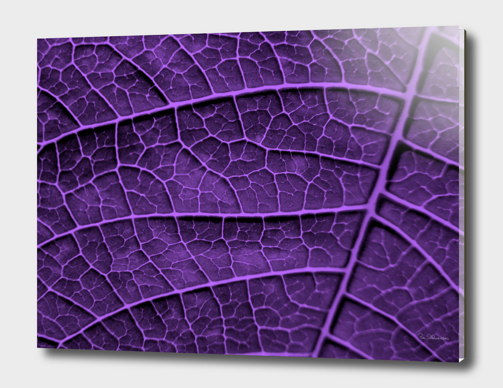 LEAF STRUCTURE ULTRAVIOLET