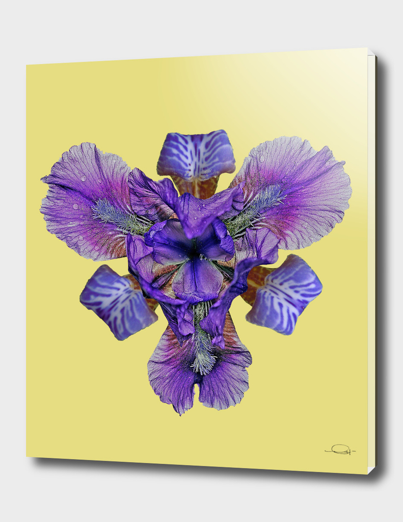 Iris Pressed Flower