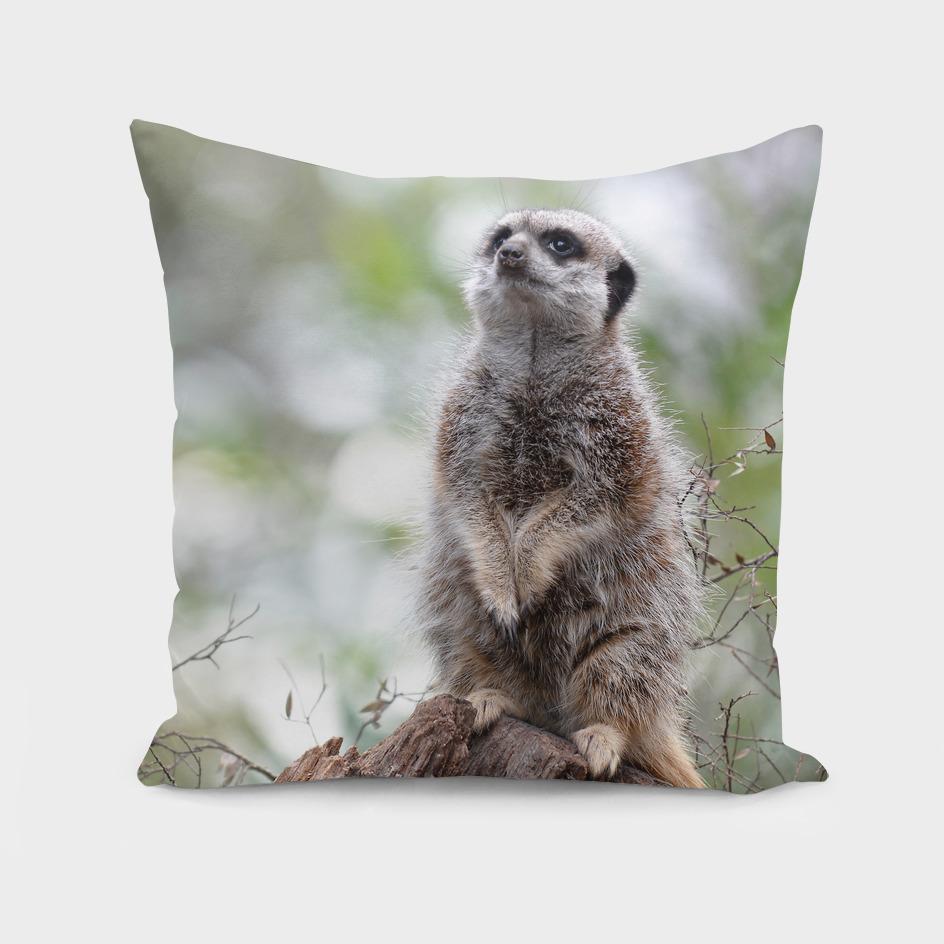 Meerkat Guard Duty