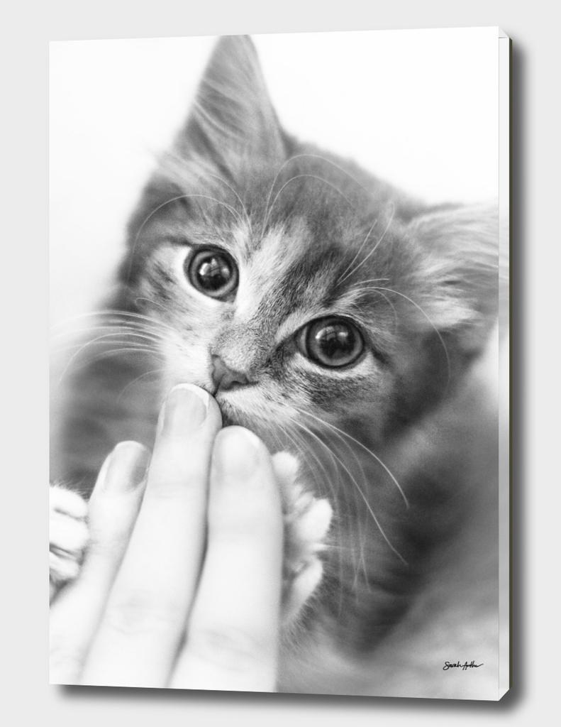 Kitten Kisses