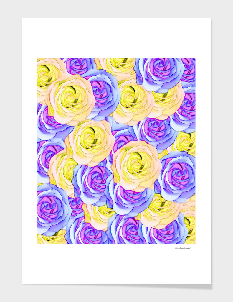 blooming rose pattern texture abstract in pink purple yellow