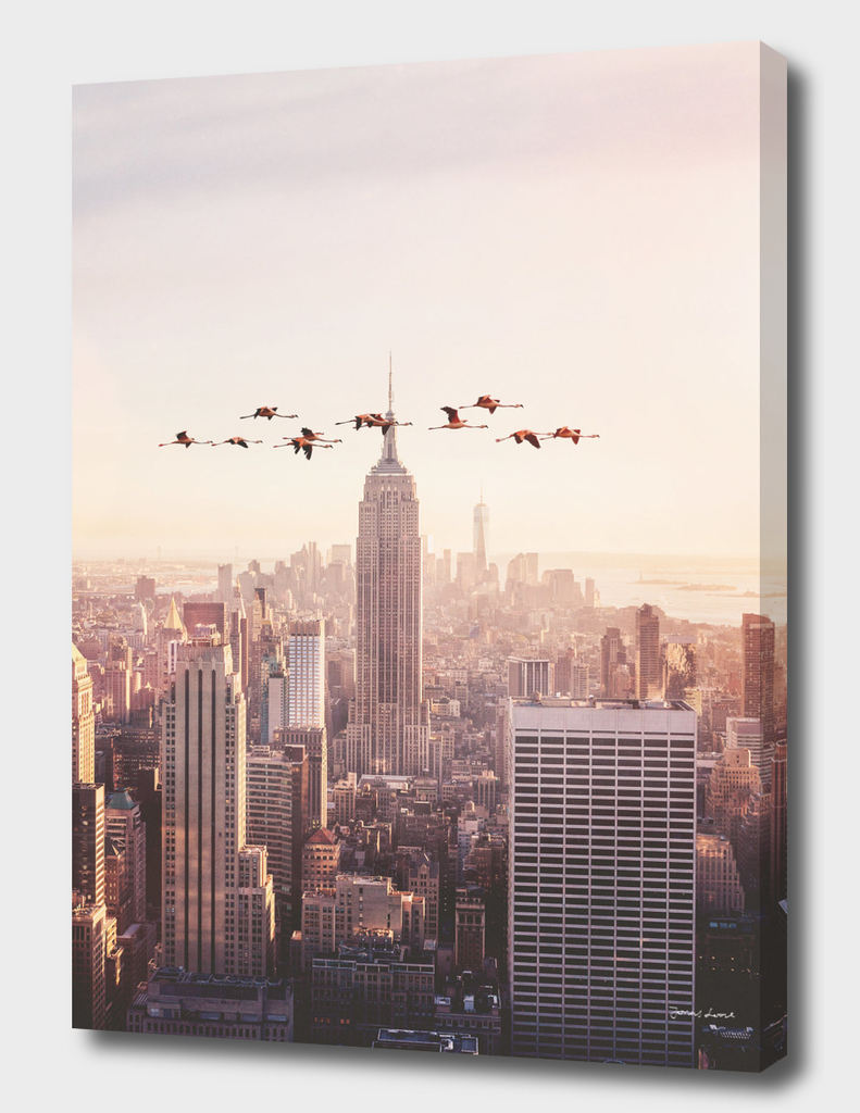FLAMINGOS IN NEW YORK