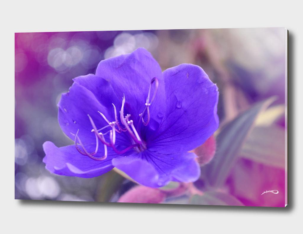 Melancholy violet by #Bizzartino