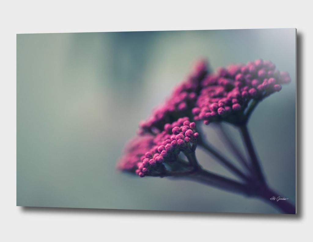 Pink winter flowers