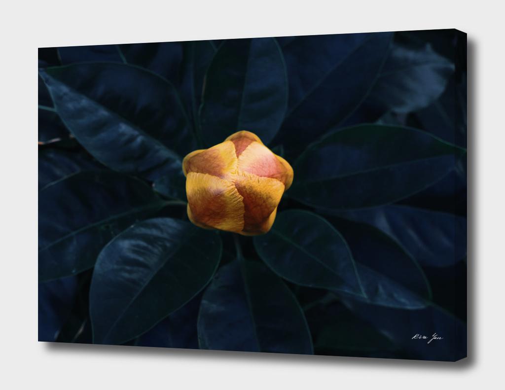 Arcane Flower