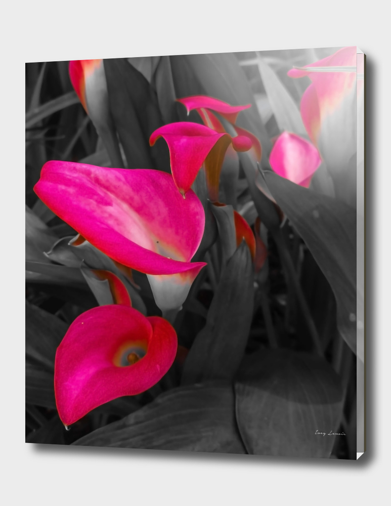 Pink [6]