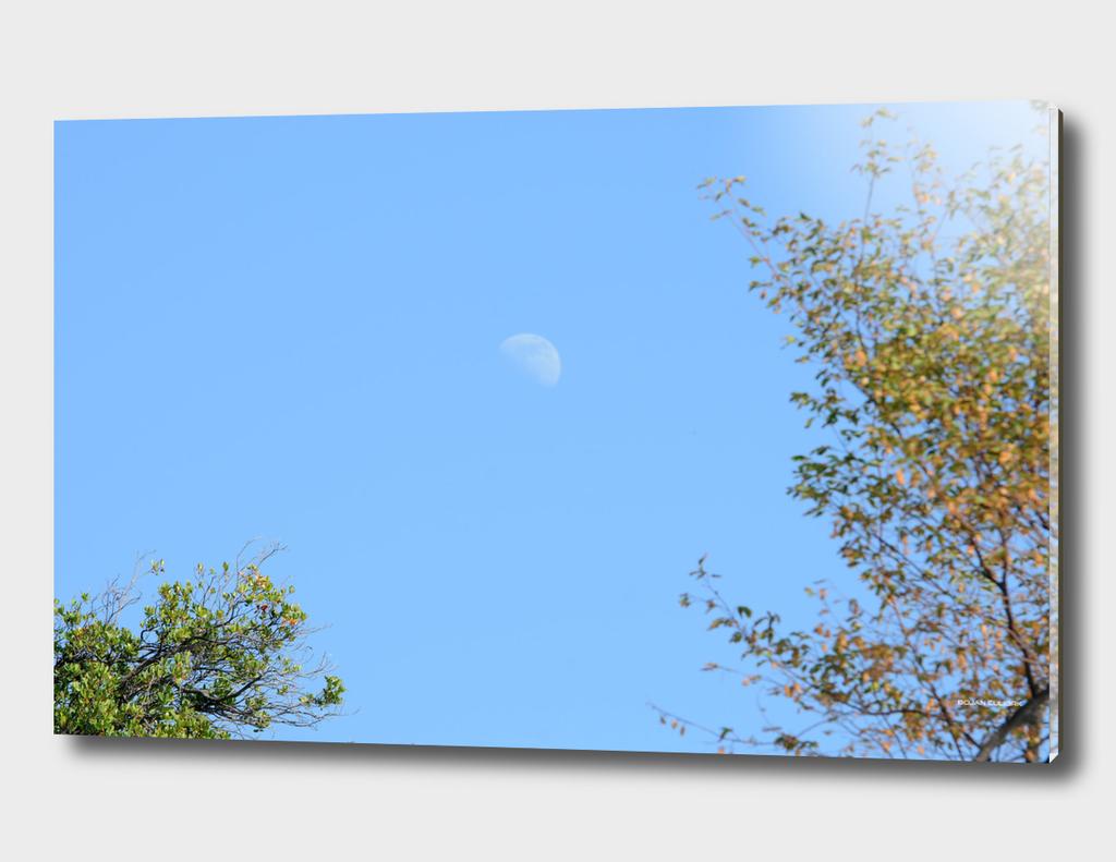 Moon (8)