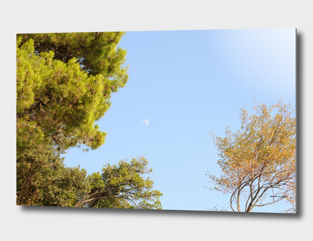 Moon (10)