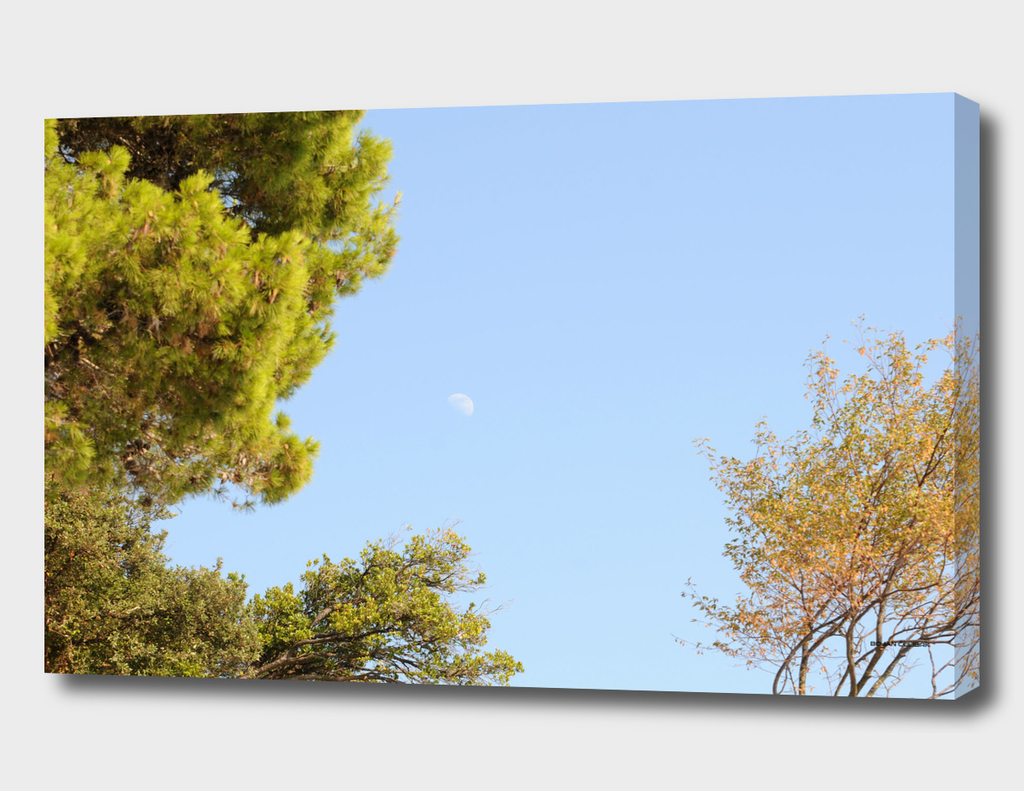 Moon (12)