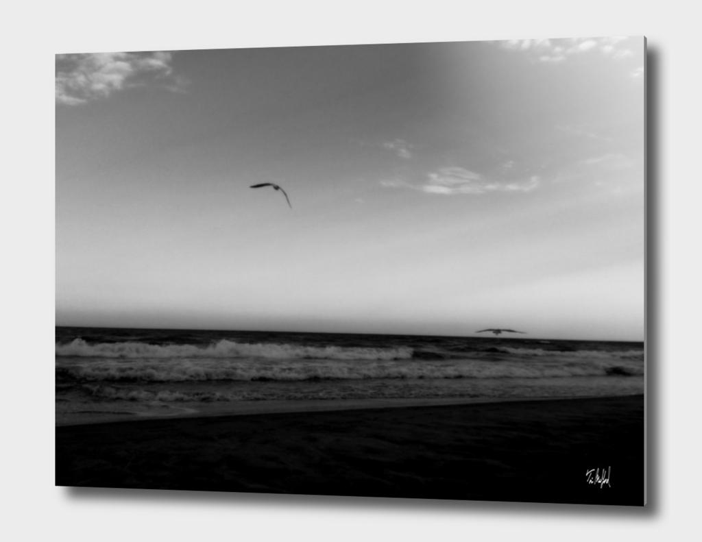 Dos Pájaros - Black & White Edition