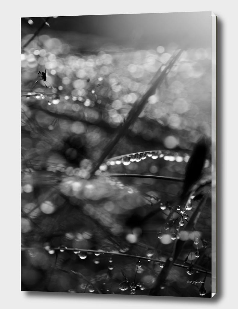 Rain 22