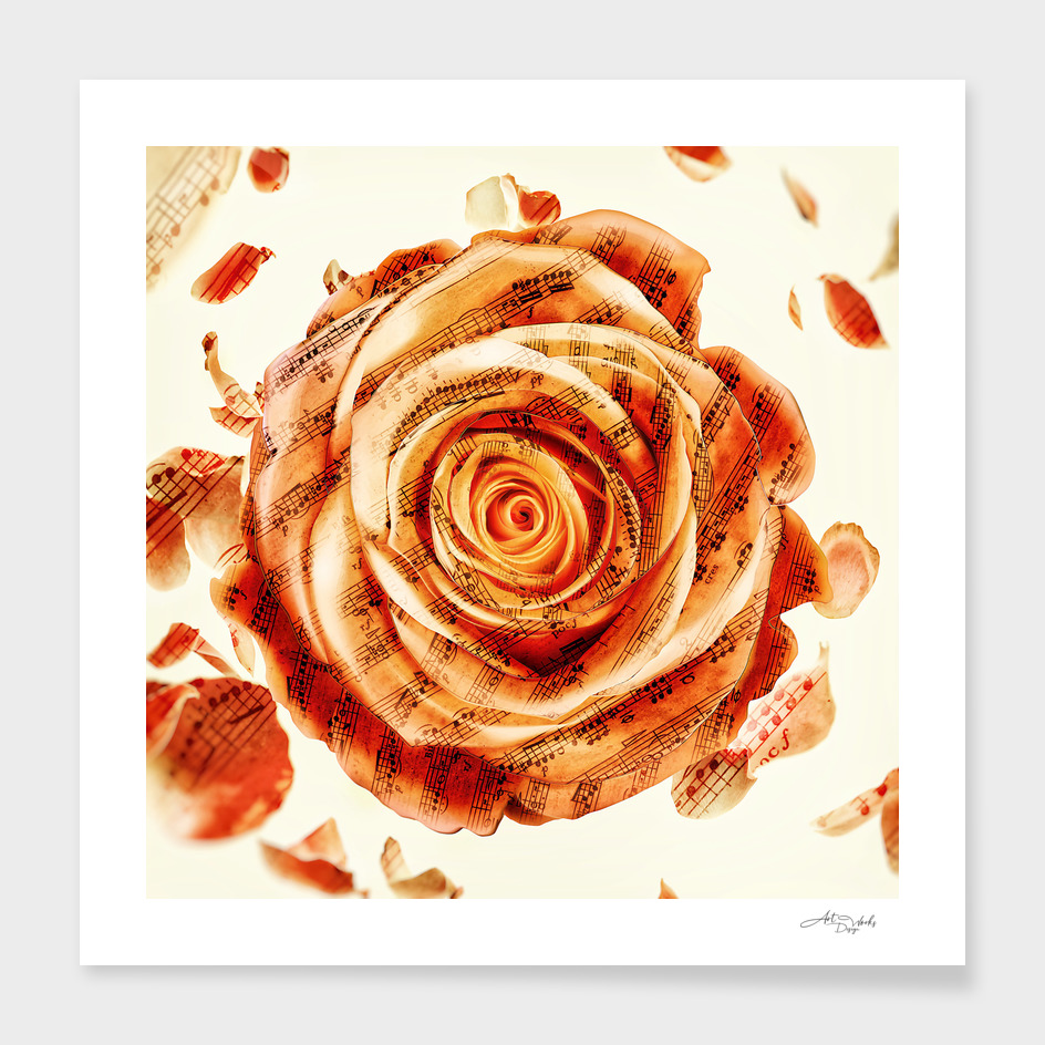 Retro rose classic
