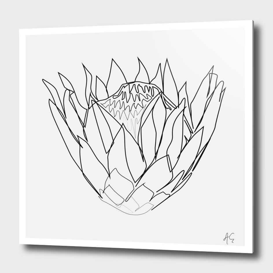Protea Flower Print (Sugarbushes)