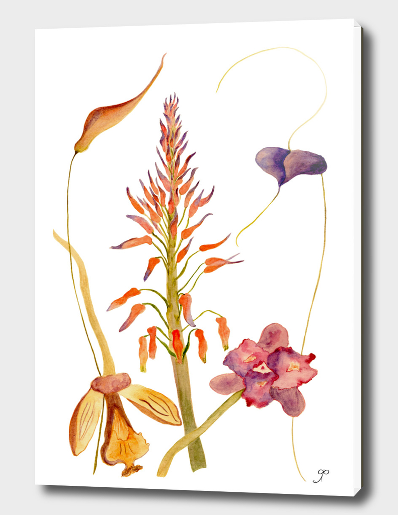 Floral composition with orchids
